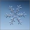 Snowflake_080020 aka Dyonisis Blue Shift fwwidallonflikr